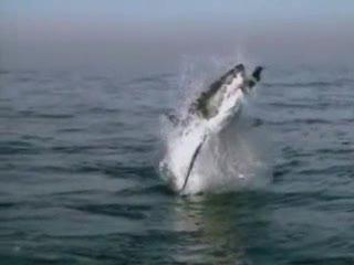 Thumb for Shark Jump