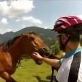 Wild Horses Are Wild