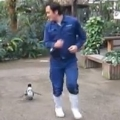 Thumb for Penguin Chasing After Zookeeper