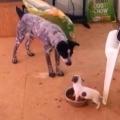 Thumb for Tiny dog vs big dog