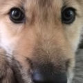 Thumb for Wolf Pup Hiccups!