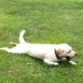 Stella's Dog Brakes