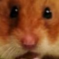 Tiny Hamster vs Kobayashi
