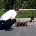 Helping Baby Ducklings out of a Storm Drain