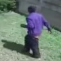 Thumb for Burglar vs Yorkie