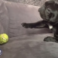 Dog Fetch Fails