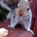 This squirrel has some serious trust issues