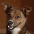 Thumb for Faithful Dog Stars In Touching Organ Donor Commercial
