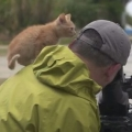 Thumb for Stray Kitten Befriends Photographer