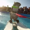 Waterskiing Squirrel Is The Best