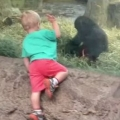Young gorilla and toddler