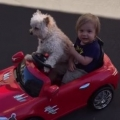 Thumb for Dog Drives Little Boy In Toy Car
