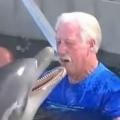 Thumb for Dolphin Encounter