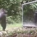 Scientists Put a Mirror in The Jungle
