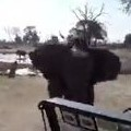 Elephant Attack Captured on GoPro