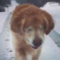 Cute Blind Dog