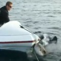 Great White Shark Attacks Small Boat In New Zealand