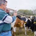 Thumb for Who Knew Cows LOVE Jazz?