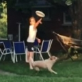 Thumb for Frisbee Dog Fail