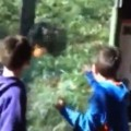 Angry Gorilla Surprises Kids at the Zoo