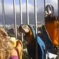 Breakfast With Macaws
