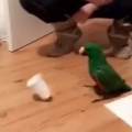 Thumb for Parrot Doing Cup Flip