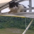 Remove Cat Before Flight