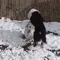 Dog Making A Snowman
