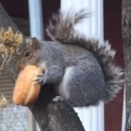 Squirrel And Donut