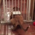Houdini Dog Escapes From Lockup