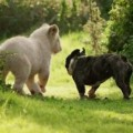 Adorable And Unusual Animal Friendships
