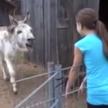 Donkey reunites with old friend