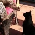 Video Proof Cats Can Be Jerks