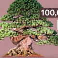 Why Bonsai Are So Expensive