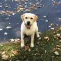 Dog Loves Playing In The Leaf Pile