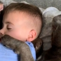 Dogs and toddler make the best of friends
