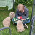 Boy Becomes Friends with Baby Owls