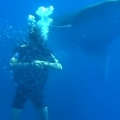 "Fish engulf diver in a ""bait ball"""