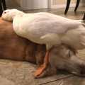 Dogs Make the Best Cuddle Buddies