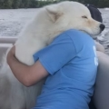 Possibly the greatest hug of all time