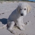 Puppy isn't happy when ocean fills up his newly dug hole