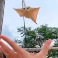 White glider slides into owner's hand like a champ