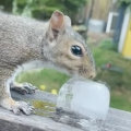 Man gives squirrel ice cube during heat wave