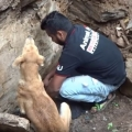 Mother dog helps rescuers dig for her trapped puppies