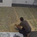 33,600 piece jigsaw puzzle time lapse
