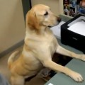 Office Worker Dog